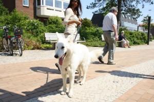 St. Peter-Ording Ferienwohnung Hund : Appartements Wieben Vierbeiner willkommen