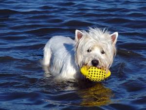 St. Peter-Ording Ferienwohnung Hund : Apaprtements Wieben